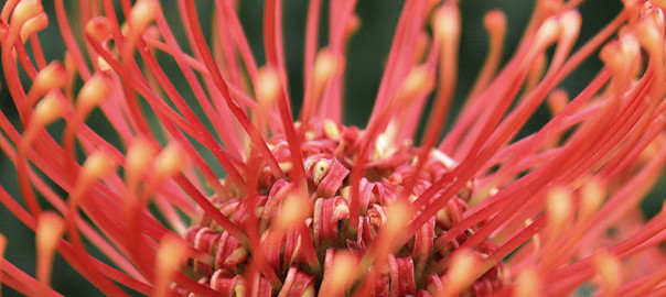 fynbos retreat feature
