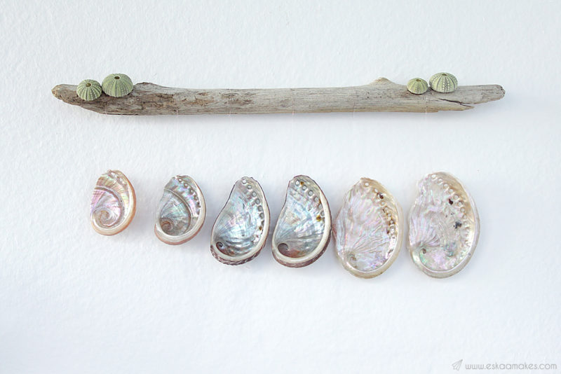 diy shell driftwood wallhanging 1