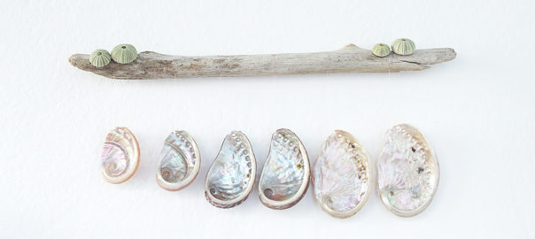 diy shell driftwood wall hanging